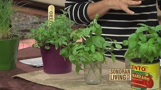 Tips on planting an indoor herb garden