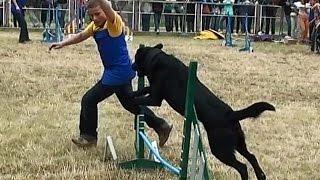 Видео про животных # Аджилити для собак    Agility Dog
