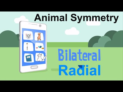 Symmetry In Animals