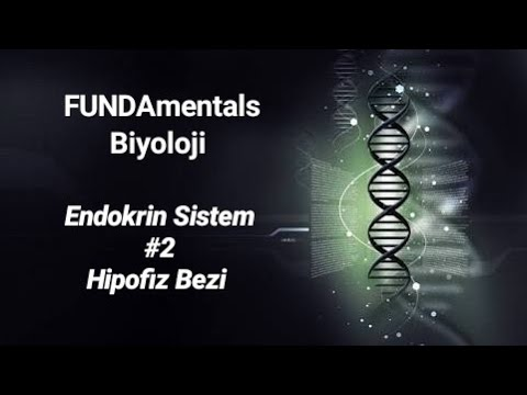 Endokrin Sistem #2 Hipofiz Bezi