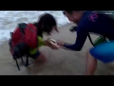 Tourist bitten while grabbing a juvenile shark for a selfie