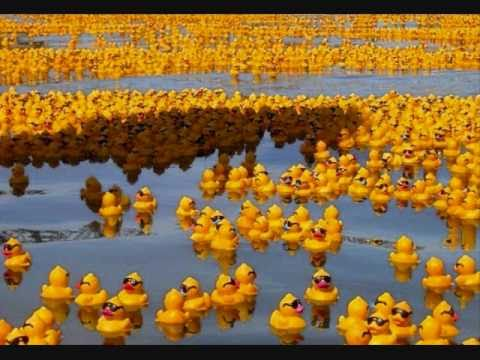 YellowRubberDucks.wmv - YouTube