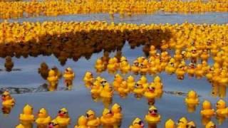 YellowRubberDucks.wmv