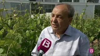 La 'Xylella fastidiosa' comença a preocupar els productors de vi de Mallorca