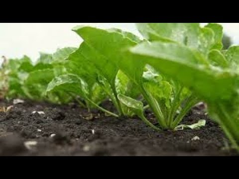 गमलो मे उगाओ ये सब्जियां//How to Grow A variety Of Vegetables in pots // Go Organic With Plants