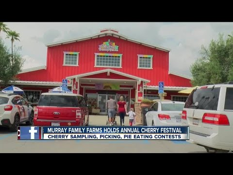 Cherry Festival at Murray Family Farms popular with families