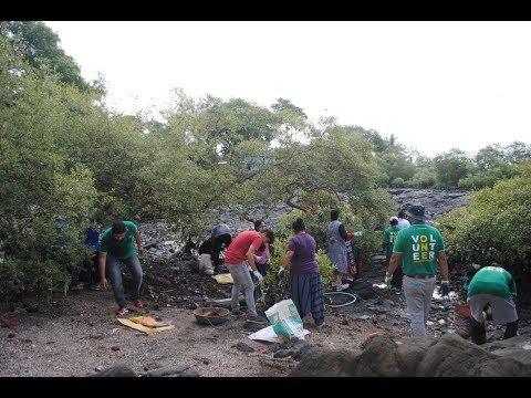 Cleaning Mumbai's Mangroves