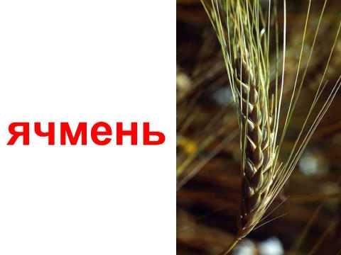 Сушка зерна и семян -