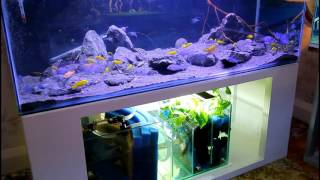 Open Water Malawian Cichlid Aquarium with Poret Sump and Sanrise LED