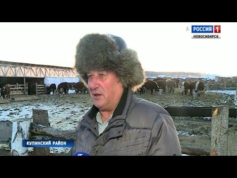 Фермер из Купинского района ищет единомышленников для создания сельхозкооператива