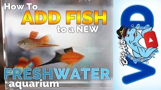 How to Add Fish to a New Freshwater Aquarium! | Big Al's
