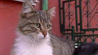 ふらふらな状態で犬にお別れを伝えに来た猫に泣けた(最期まで一緒に散歩がしたかった猫)The Cat Who Came to Say Goodbye thumbnail