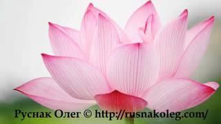 Трансцендентальная медитация любви