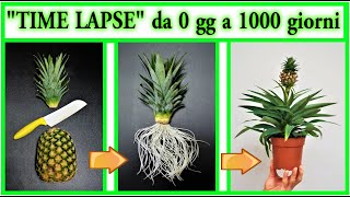 """Download Mp3 """"time Lapse Ananas"""" Nascita E Crescita Da Zero A 3 Anni, Con Fioritura"""