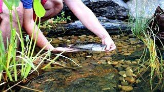 Releasing Pet Bass into Backyard Pond!!