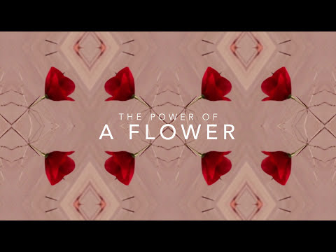 FLOWER BY KENZO - The powers of a flower