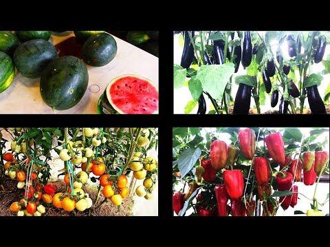 Природное земледелие на практике  РЕЗУЛЬТАТЫ