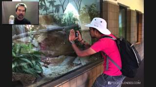 Photographing Animals Behind Glass Thumbnail