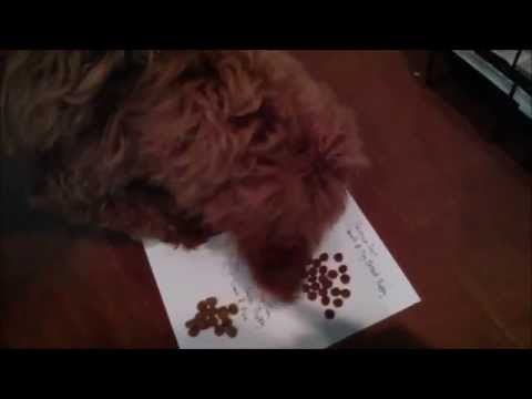 Puppy Food Challenge - Royal Canin, Science Diet, Tuscan Natural, Purina Pro Plan
