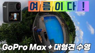 고프로 맥스 360 액션캠에 담은 대형견 친구들의 수영…