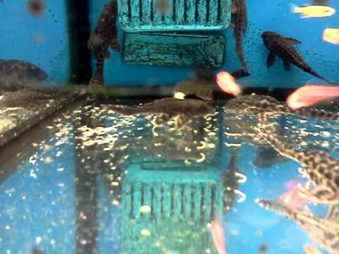 Fish at walmart eating each other youtube for Walmart fish finder
