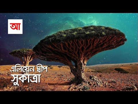 এলিয়েন দ্বীপ সুকাত্রা | আদ্যোপান্ত | The Alien Beauty Of Socotra Island