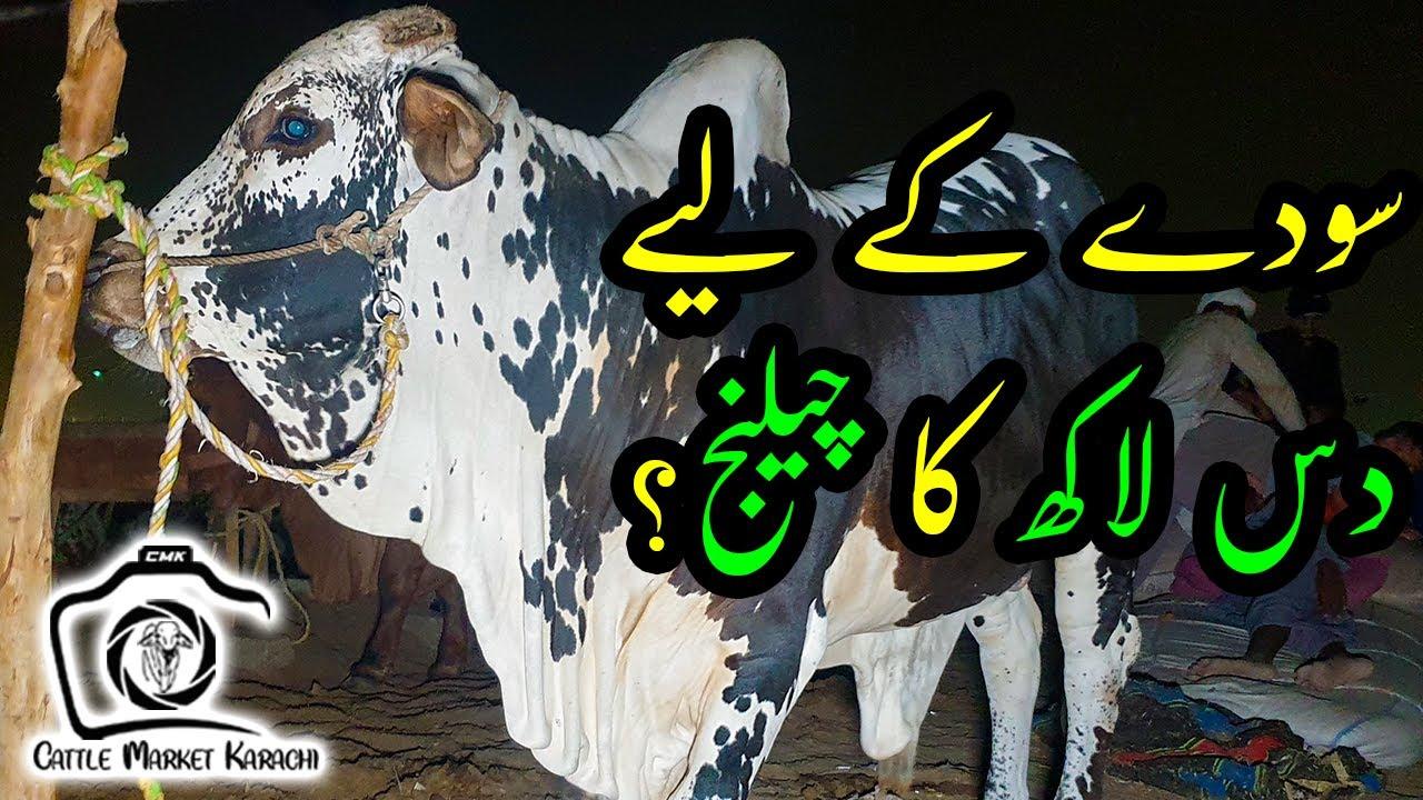 BARGAINING at Sohrab Goth Cow Mandi 2021   Cattle Market Karachi   Bakra Eid 2021   Eid ul Azha
