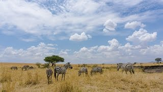 "Chapter 24: This Is What a ""Budget"" $300 Maasai Mara Safari Is Like (Maasai Mara, Kenya)"