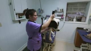 Springwood Pet Boarding and Grooming | Hephzibah, GA | Pet Grooming
