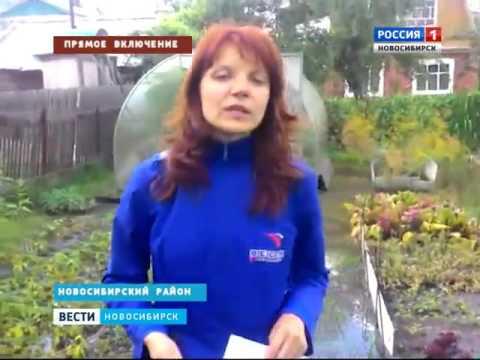Около ста дачных участков подтоплены в Новосибирск