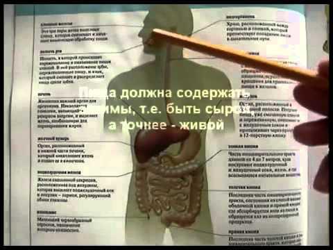Глисты у человека: фото, симптомы, лечение. Как выглядят и