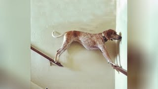 So FREAKING FUNNY you'll WET YOUR PANTS! - Best DOG VIDEOS ever