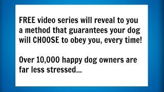 Dog Behavior Training (dog Training Tips) Your At Home Dog Training Guide