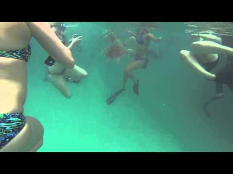 A trip to The Great Barrier Reef