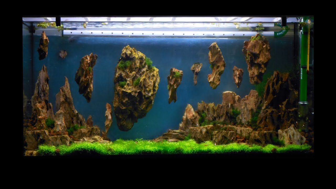 Allestimento Acquario Fantasy Aquarium Setup Aquascape Esercitazioni Jedi Step 3 Youtube