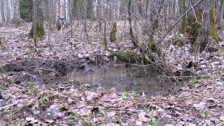Ржев  раскопки весна 2011.