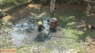 Ngày hè:  Phần 4: Ao cạn nước rủ nhau mò bắt cá lóc