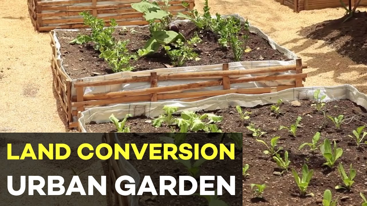 Urban Gardening In The Philippines And Land Conversion Earn Money