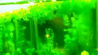 Все-все мои аквариумы(, 2014-11-28T21:02:48.000Z)