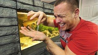 are-stingrays-dangerous-to-keep-in-the-aquarium