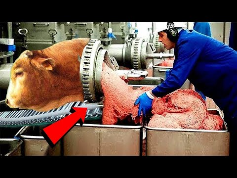 Incredible Modern Farming Milking Harvest Technology. Amazing Automatic Cow Farming Factory | Part-2