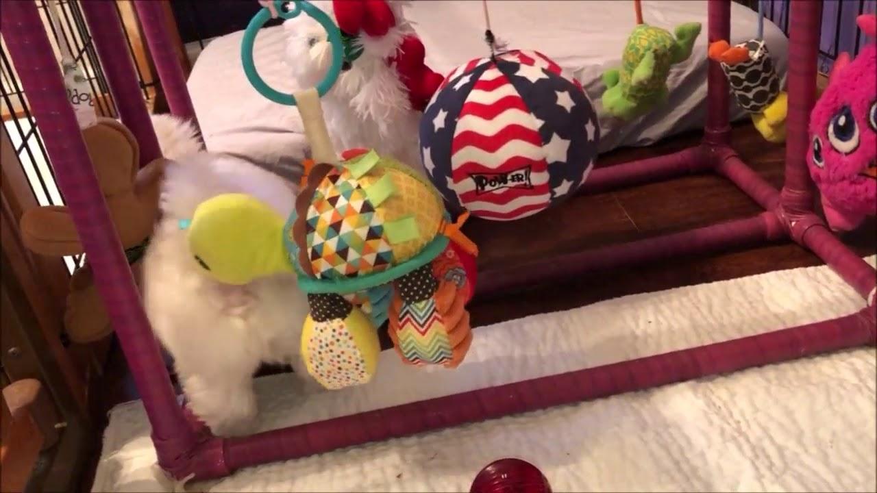 CH Gigolo & Whisper - Ellie's New Toys