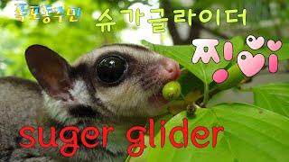 [kobo jeong] 슈가글라이더와 산수유와 작약**…