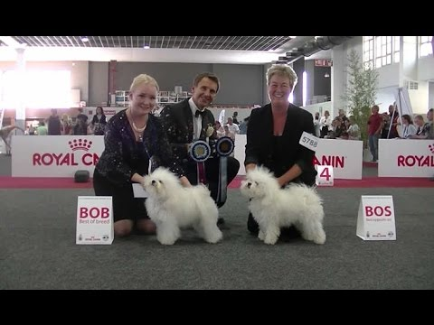 European Dog Show 2016 Bolognese 4