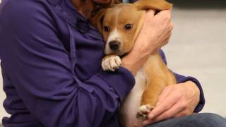 What Is Therapy Dog Training? | Dog Training