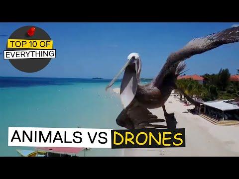 TOP 10 ANIMALS VS DRONE ENCOUNTERS
