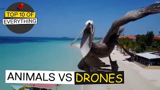 TOP 10 ANIMALS VS DRONE ENCOUNTERS