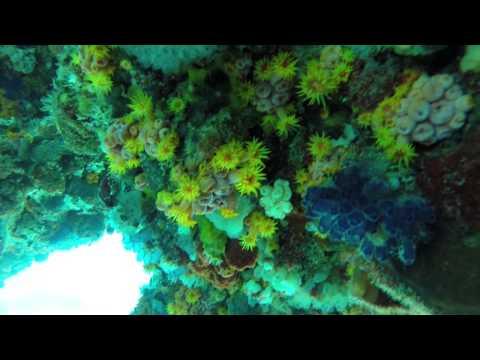 GOPR1868 diving Kingston Reef off Rottnest Island