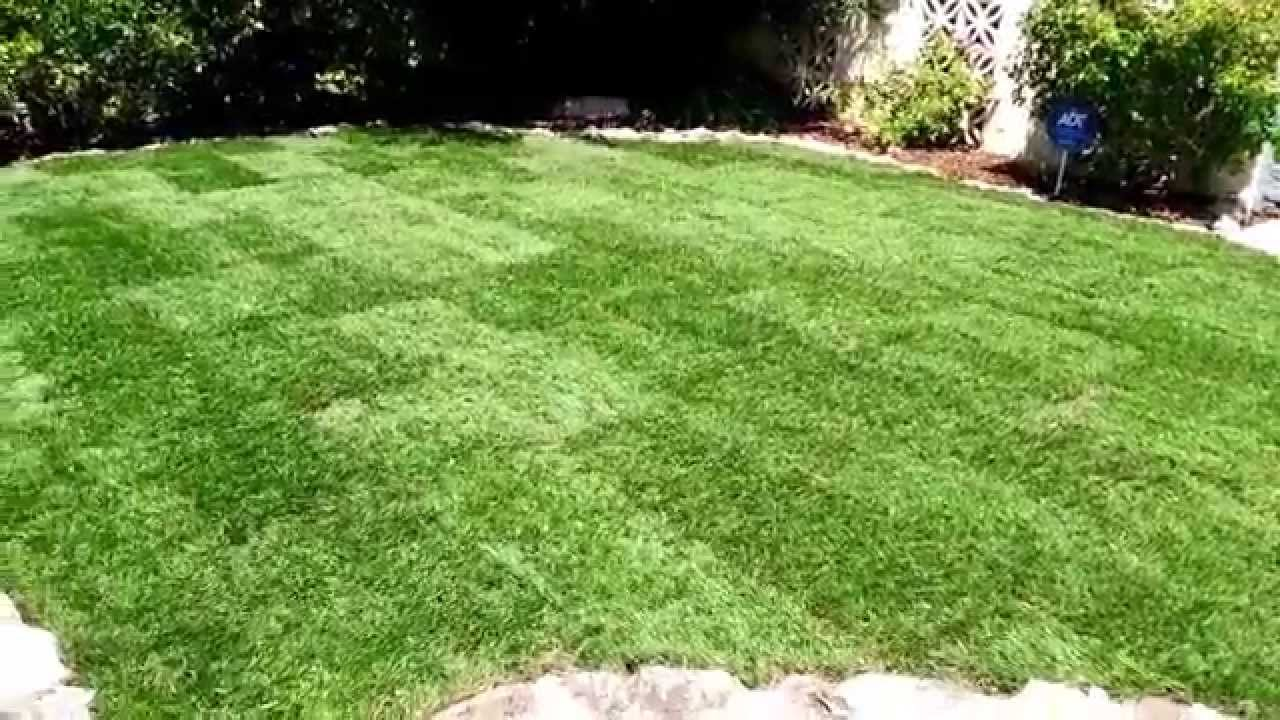 Save Water with Marathon Grass