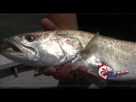 Port Mansfield Monster Trout
